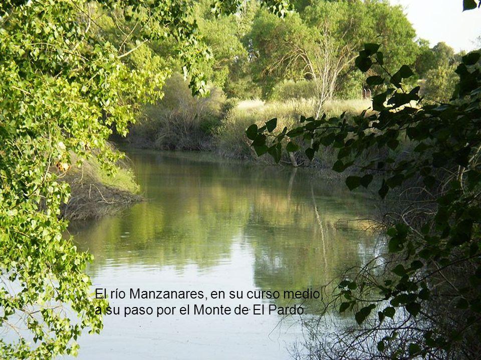 El río Manzanares, en su curso medio, a su paso por el Monte de El Pardo.