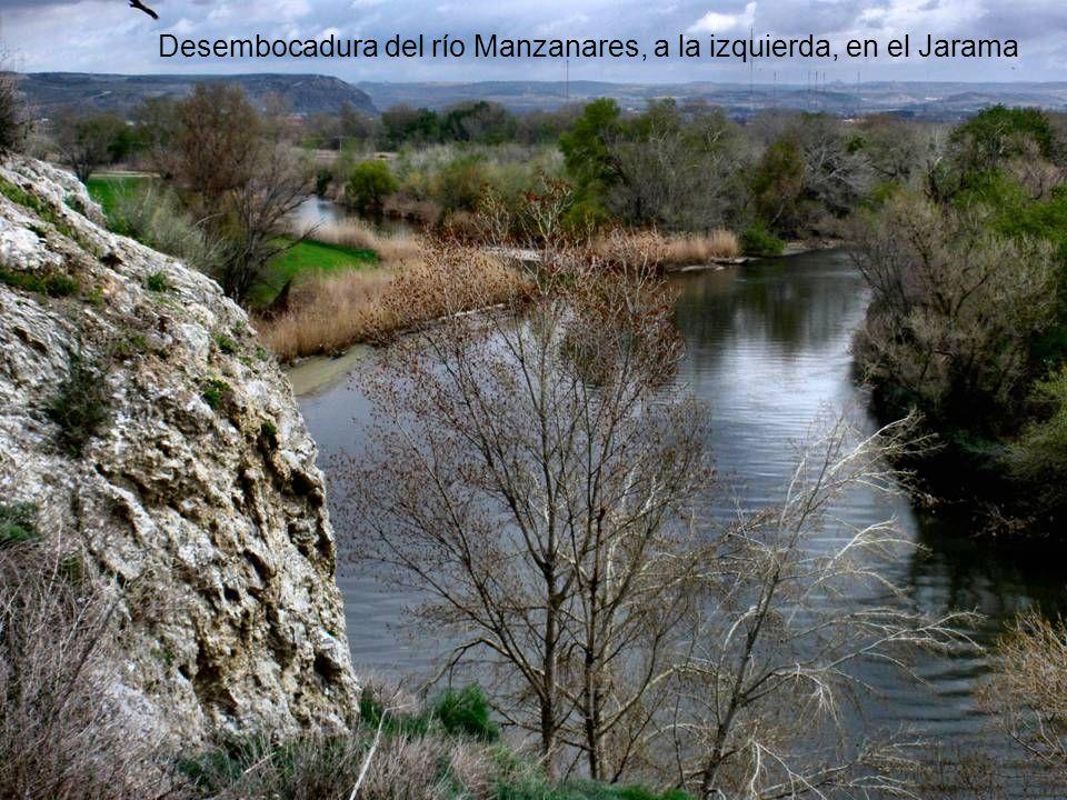 Desembocadura del río Manzanares, a la izquierda, en el Jarama