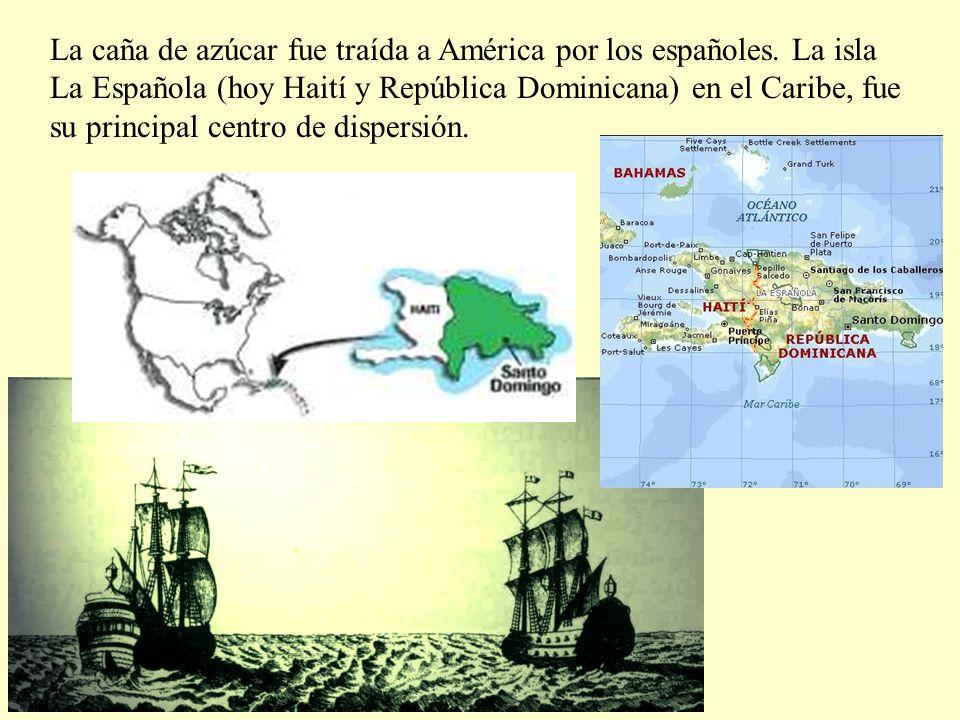 La caña de azúcar fue traída a América por los españoles