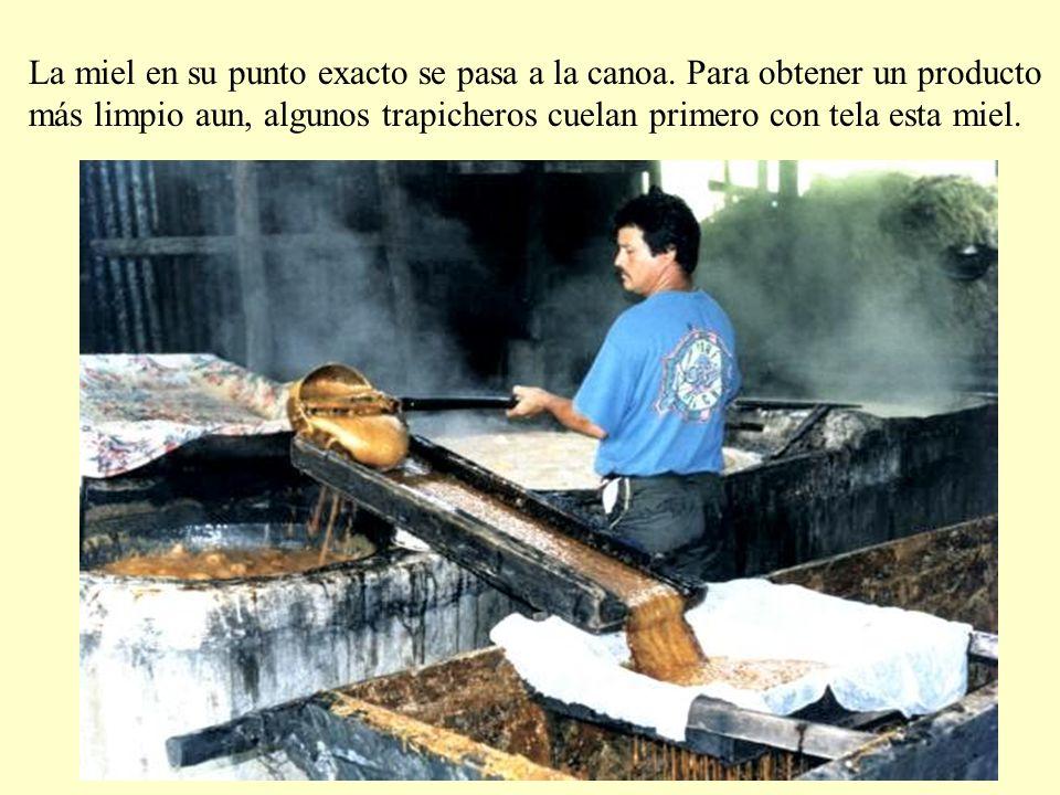 La miel en su punto exacto se pasa a la canoa. Para obtener un producto