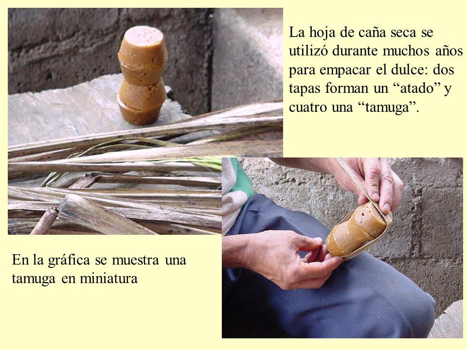 La hoja de caña seca se utilizó durante muchos años. para empacar el dulce: dos. tapas forman un atado y.