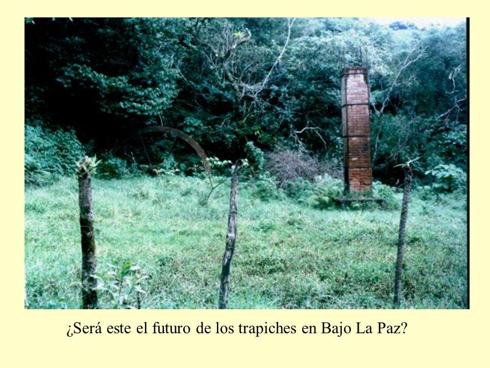¿Será este el futuro de los trapiches en Bajo La Paz