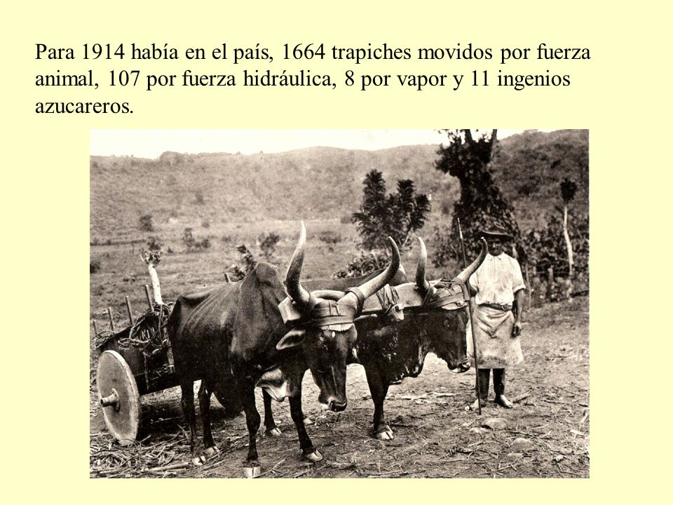 Para 1914 había en el país, 1664 trapiches movidos por fuerza animal, 107 por fuerza hidráulica, 8 por vapor y 11 ingenios azucareros.