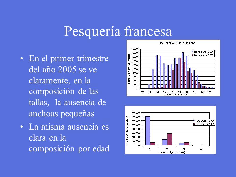 Pesquería francesa En el primer trimestre del año 2005 se ve claramente, en la composición de las tallas, la ausencia de anchoas pequeñas.