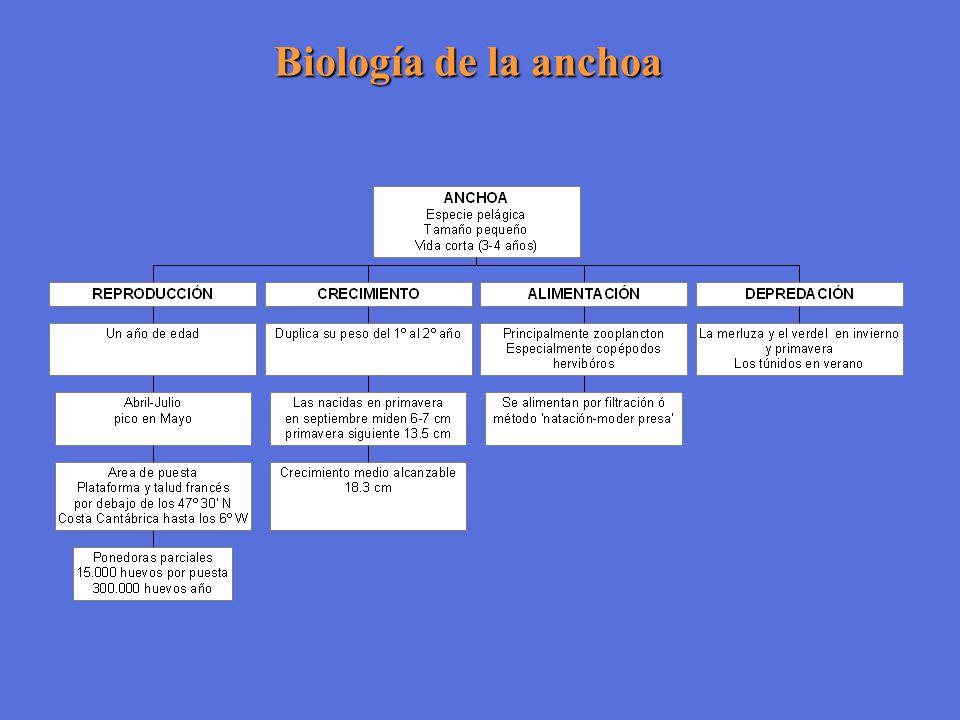 Biología de la anchoa