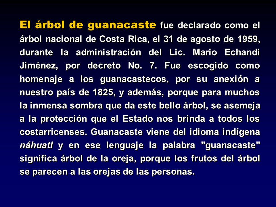 El árbol de guanacaste fue declarado como el árbol nacional de Costa Rica, el 31 de agosto de 1959, durante la administración del Lic.