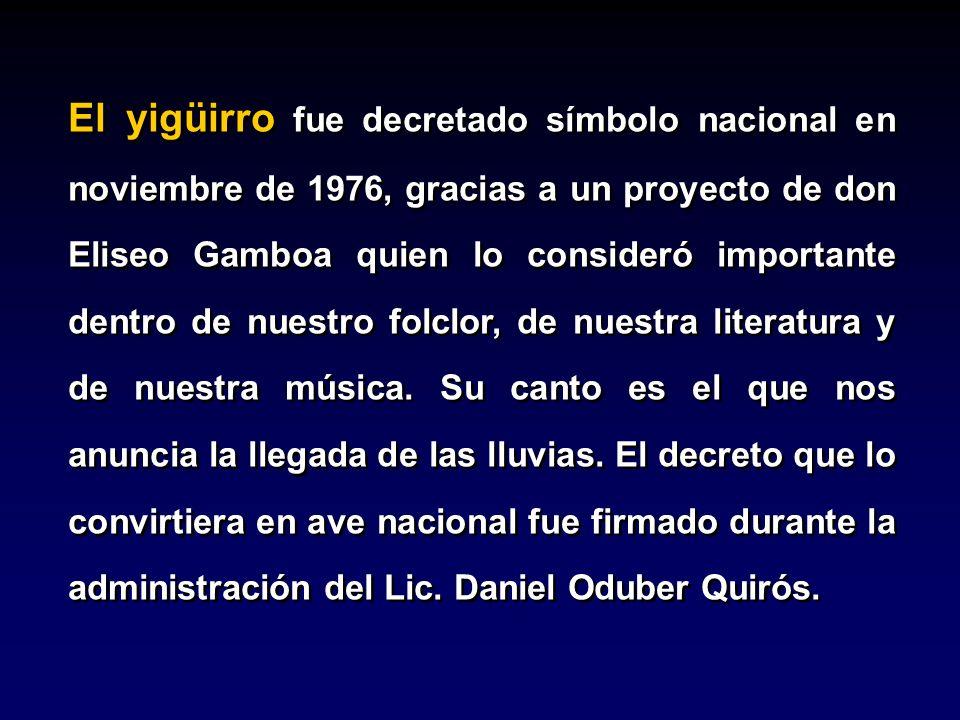 El yigüirro fue decretado símbolo nacional en noviembre de 1976, gracias a un proyecto de don Eliseo Gamboa quien lo consideró importante dentro de nuestro folclor, de nuestra literatura y de nuestra música.