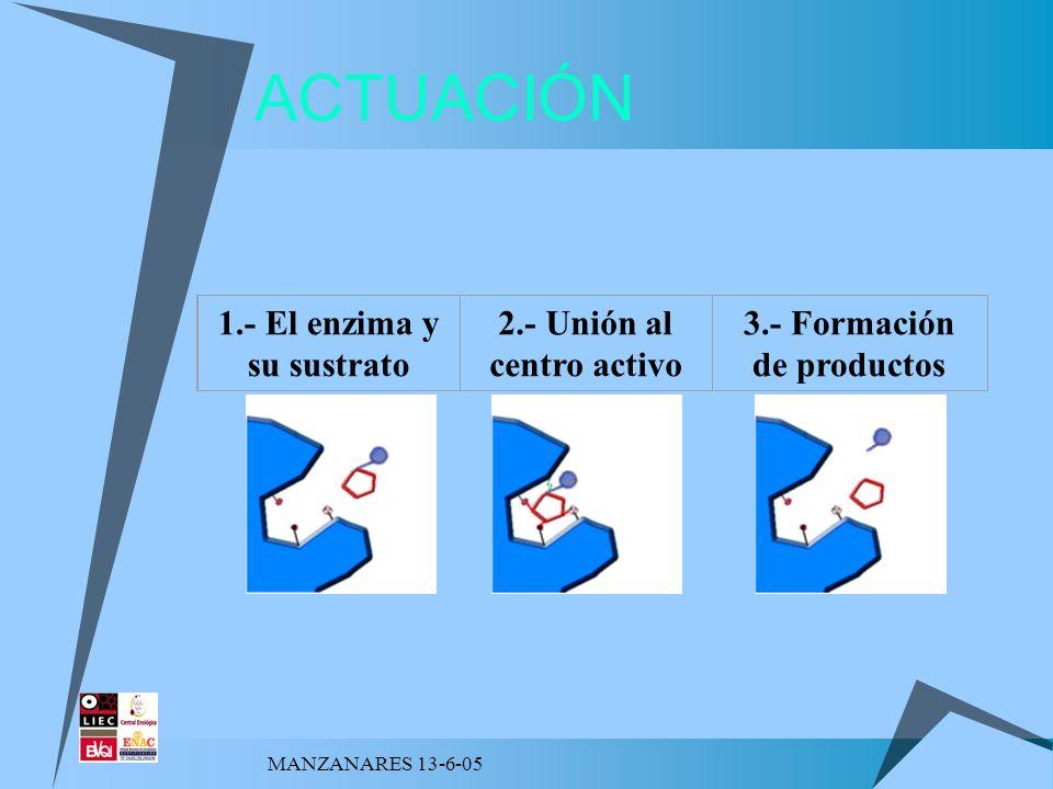ACTUACIÓN 1.- El enzima y su sustrato 2.- Unión al centro activo