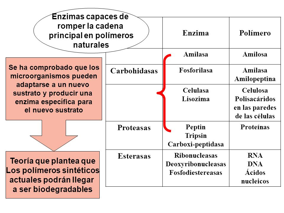 principal en polímeros naturales Enzima Polímero