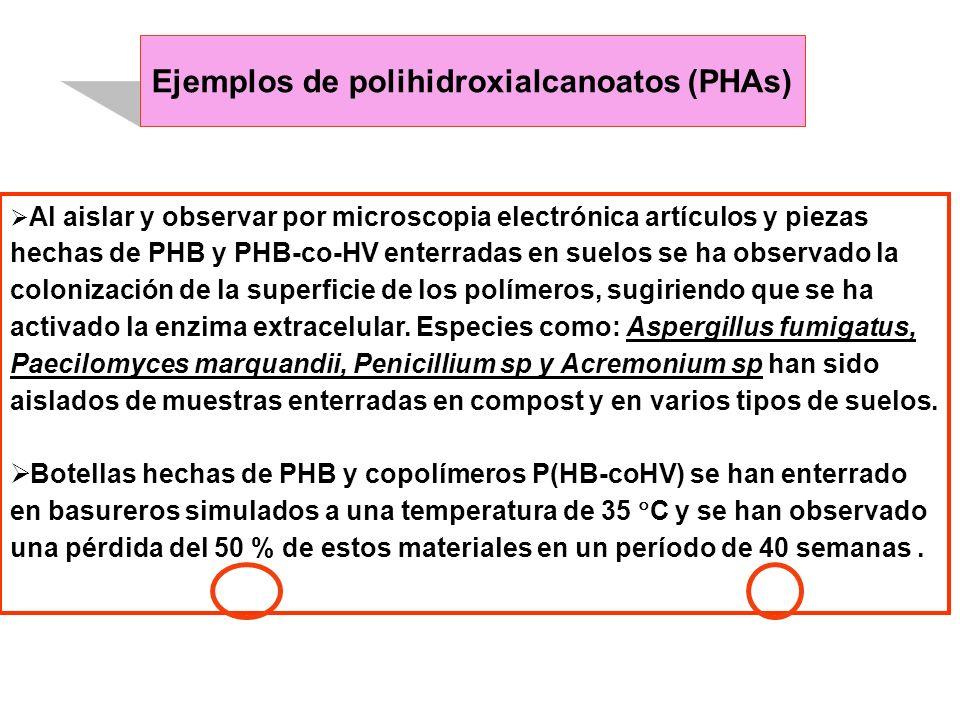 Ejemplos de polihidroxialcanoatos (PHAs)