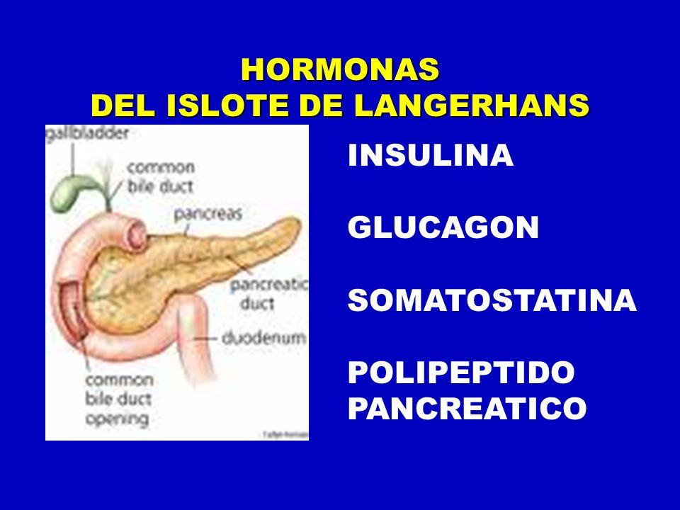 HORMONAS DEL ISLOTE DE LANGERHANS