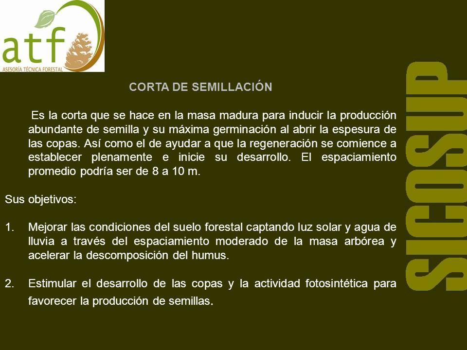 CORTA DE SEMILLACIÓN