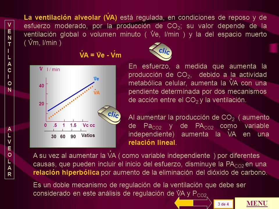 La ventilación alveolar (VA) está regulada, en condiciones de reposo y de esfuerzo moderado, por la producción de CO2; su valor depende de la ventilación global o volumen minuto ( Ve, l/min ) y la del espacio muerto ( Vm, l/min )