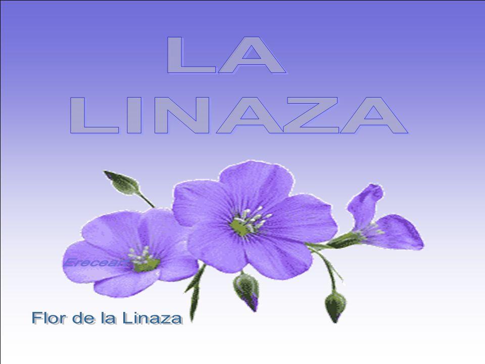 LA LINAZA Ereceart Flor de la Linaza