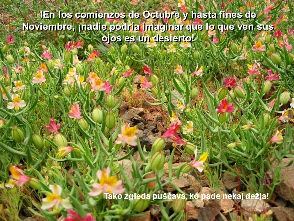 !En los comienzos de Octubre y hasta fines de Noviembre, ¡nadie podría imaginar que lo que ven sus ojos es un desierto!