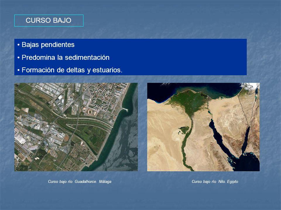 Predomina la sedimentación Formación de deltas y estuarios.