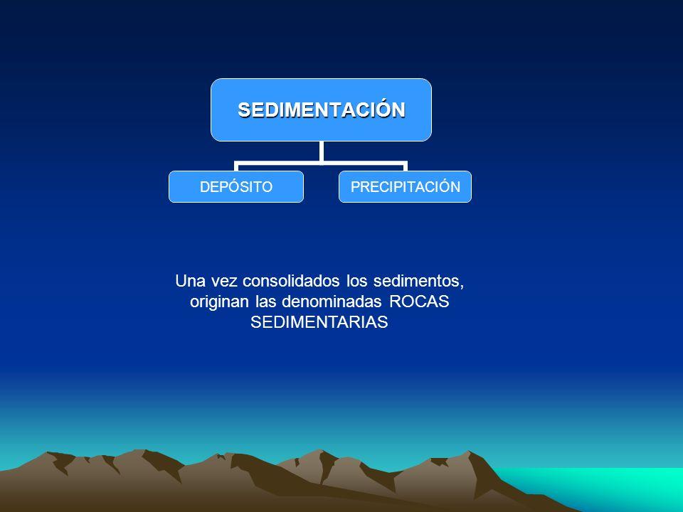 Una vez consolidados los sedimentos, originan las denominadas ROCAS SEDIMENTARIAS