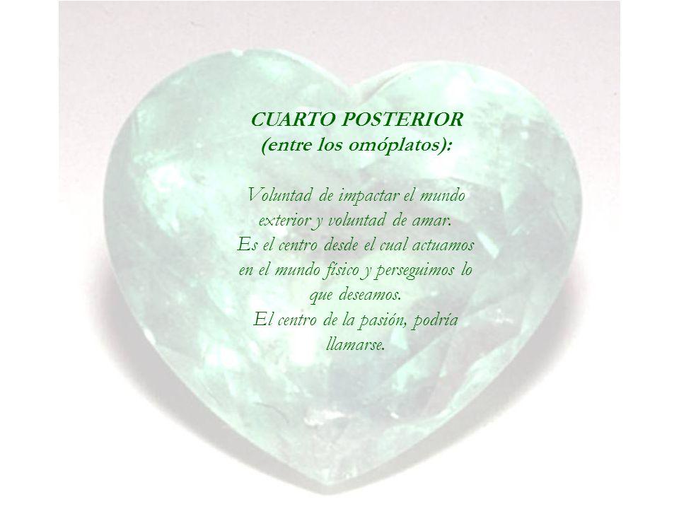 CUARTO POSTERIOR (entre los omóplatos):