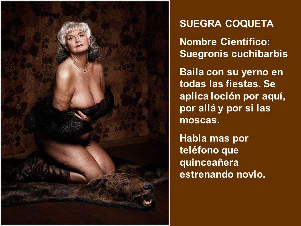 SUEGRA COQUETA Nombre Científico: Suegronis cuchibarbis.
