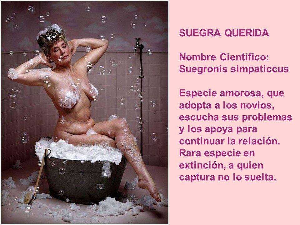 SUEGRA QUERIDA Nombre Científico: Suegronis simpaticcus.