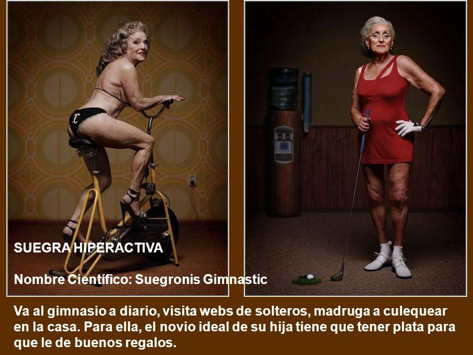 SUEGRA HIPERACTIVA Nombre Científico: Suegronis Gimnastic.