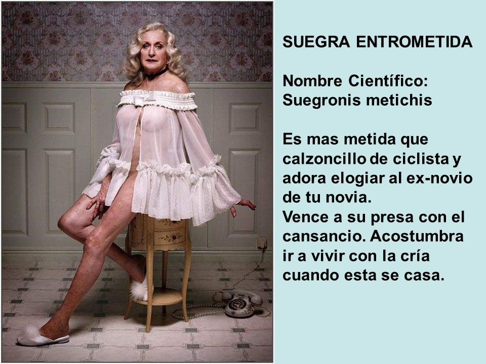 SUEGRA ENTROMETIDA Nombre Científico: Suegronis metichis. Es mas metida que calzoncillo de ciclista y adora elogiar al ex-novio de tu novia.