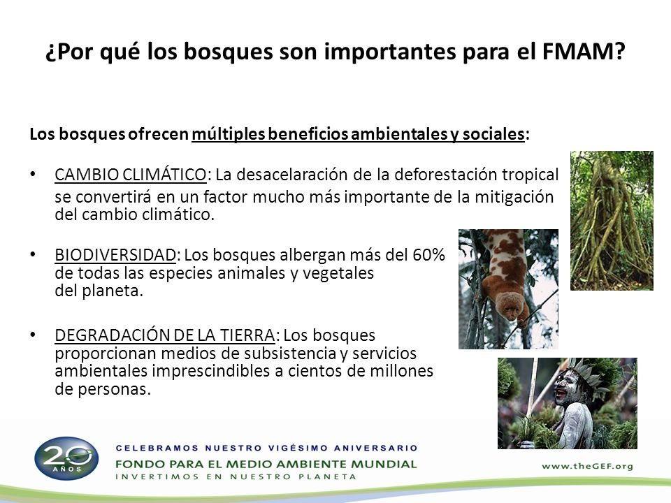 ¿Por qué los bosques son importantes para el FMAM