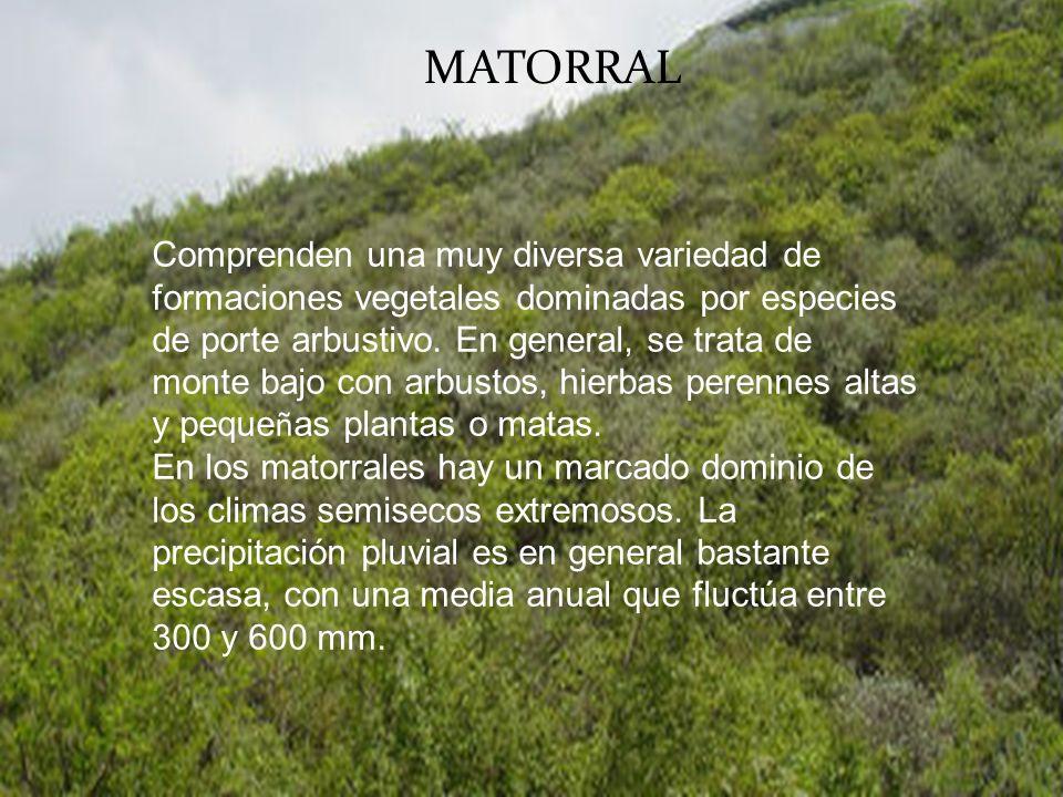 MATORRAL