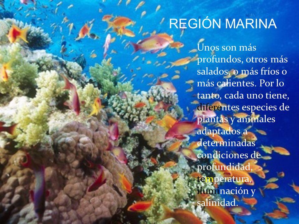 REGIÓN MARINA