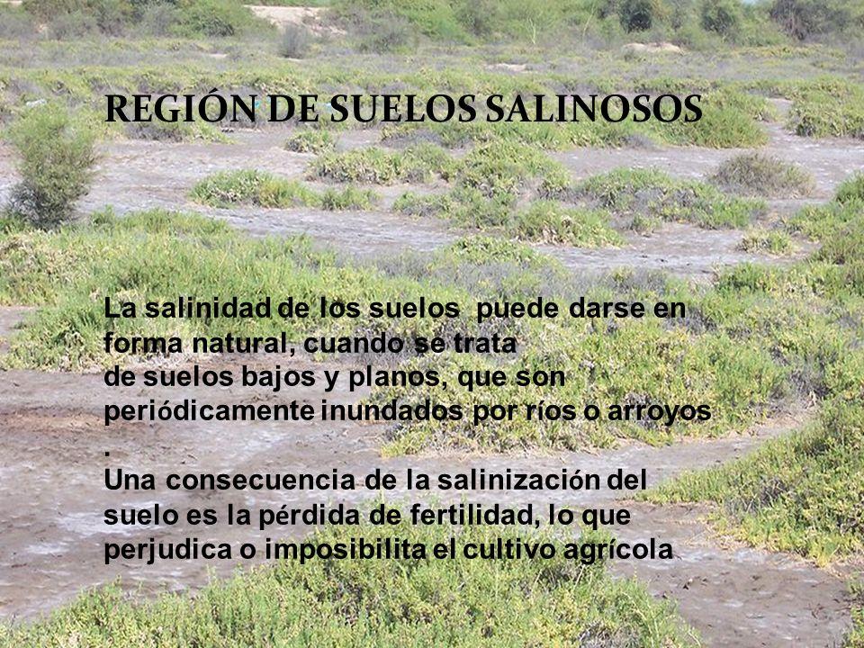 REGIÓN DE SUELOS SALINOSOS
