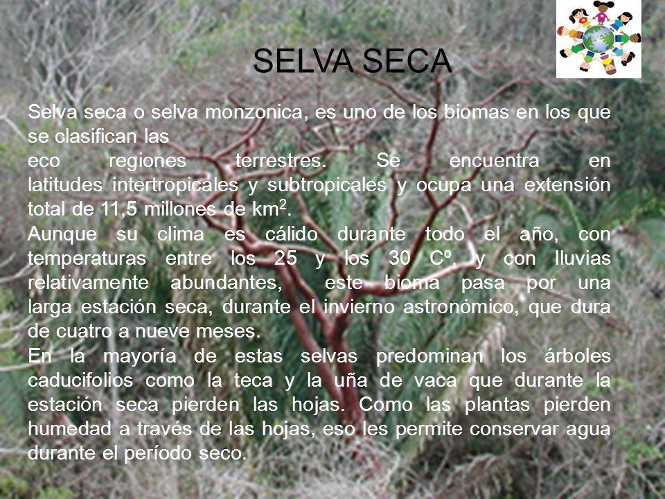 SELVA SECA Selva seca o selva monzonica, es uno de los biomas en los que se clasifican las