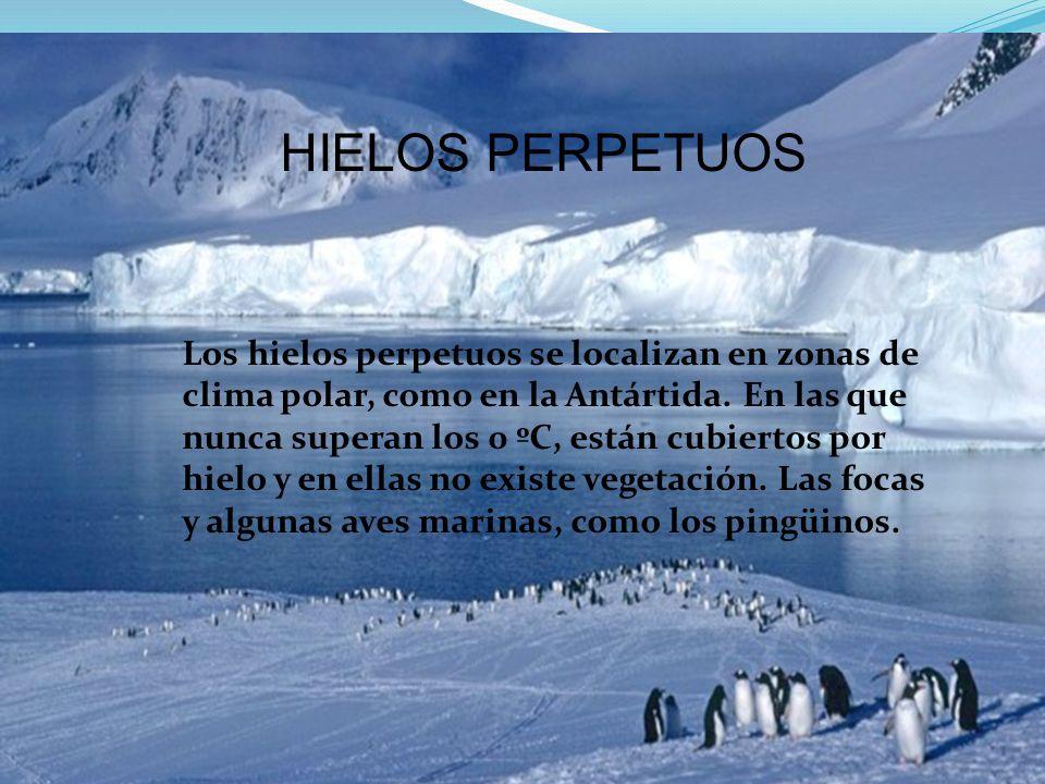 HIELOS PERPETUOS