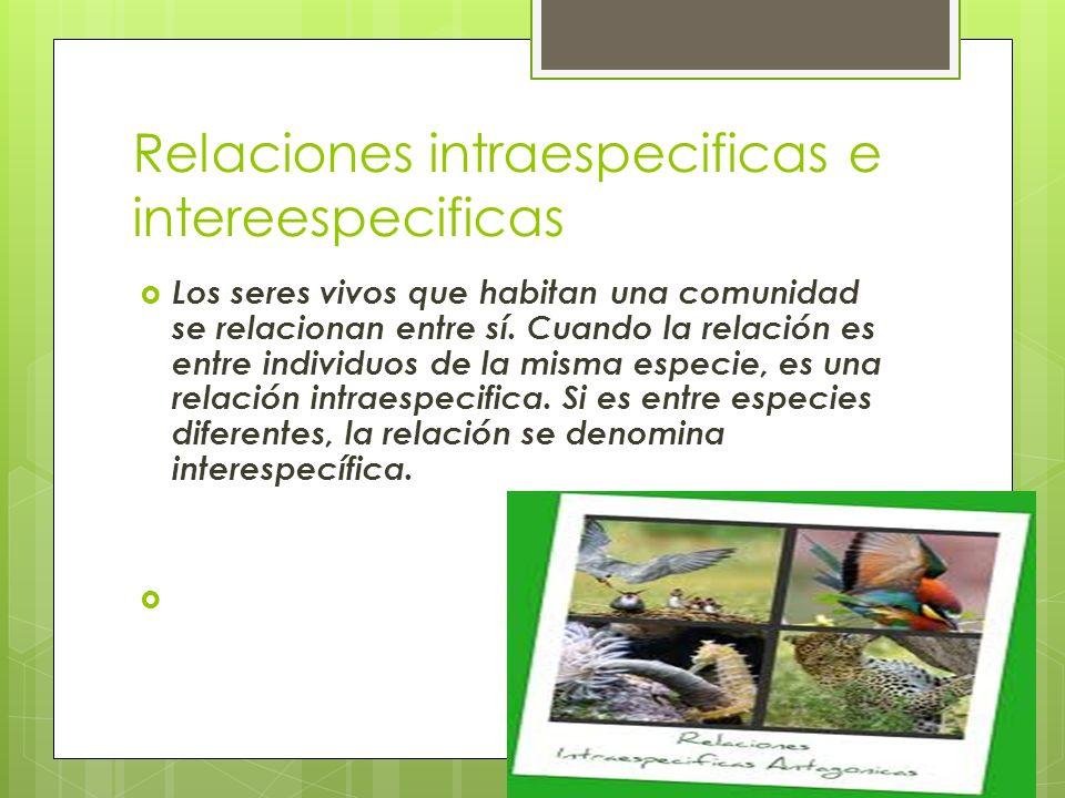 Relaciones intraespecificas e intereespecificas