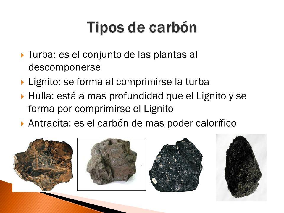 Tipos de carbón Turba: es el conjunto de las plantas al descomponerse
