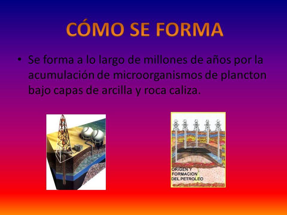 CÓMO SE FORMA Se forma a lo largo de millones de años por la acumulación de microorganismos de plancton bajo capas de arcilla y roca caliza.