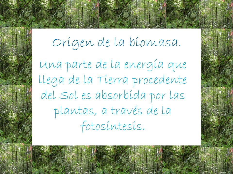 Origen de la biomasa.