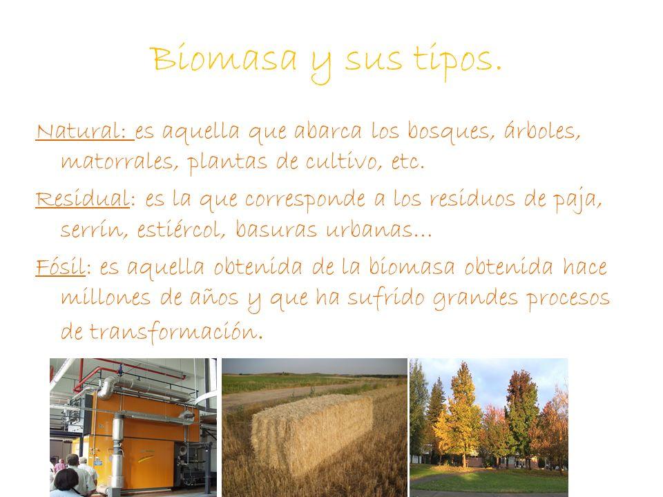 Biomasa y sus tipos.