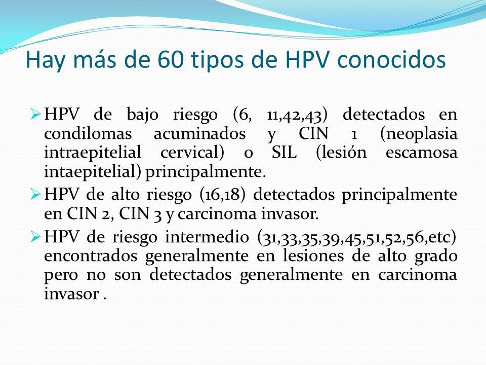Hay más de 60 tipos de HPV conocidos