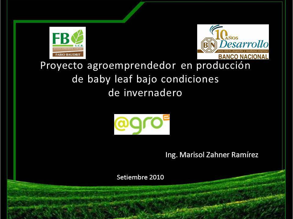 Proyecto agroemprendedor en producción de baby leaf bajo condiciones