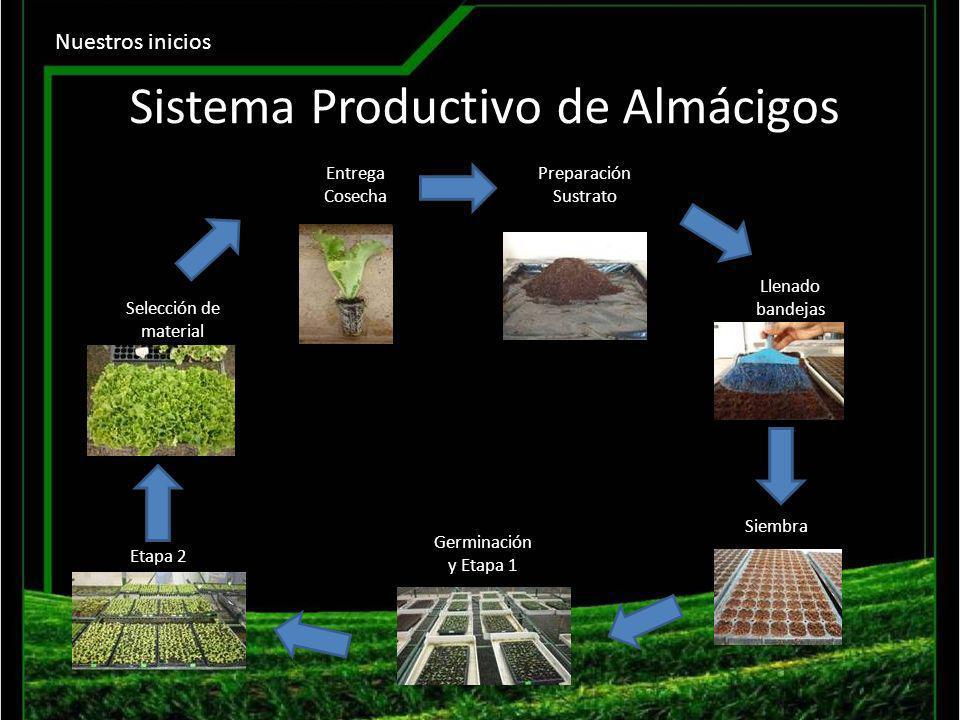 Sistema Productivo de Almácigos
