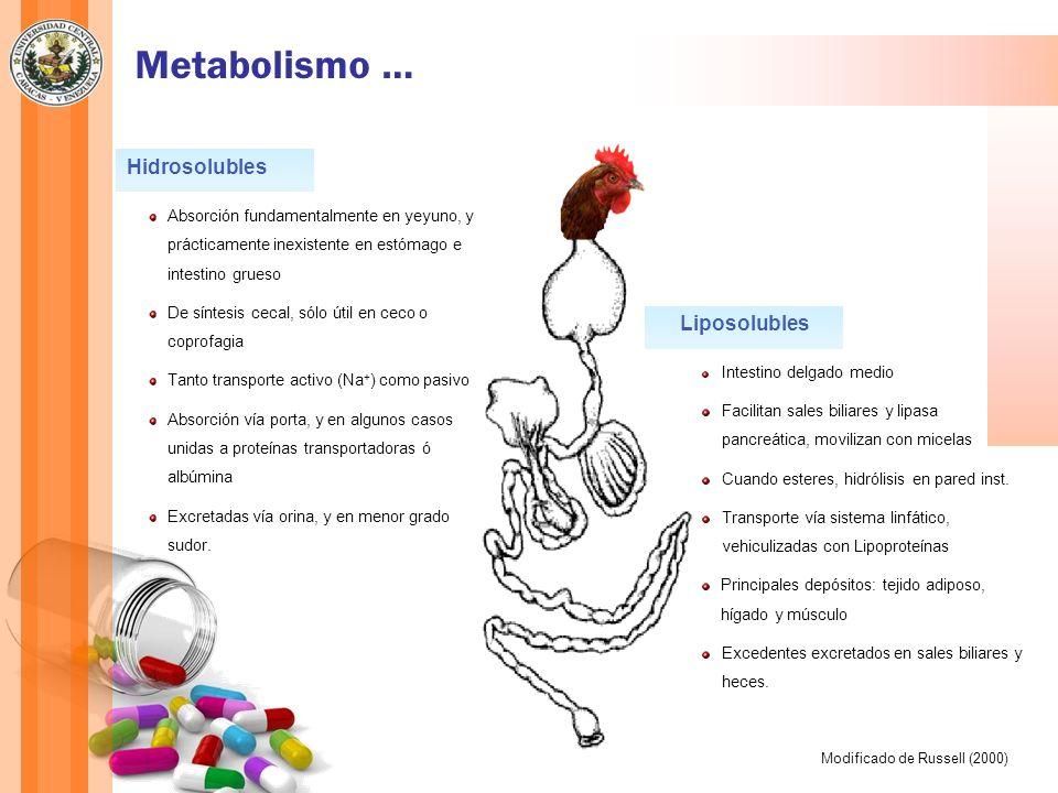 Metabolismo … Hidrosolubles Liposolubles