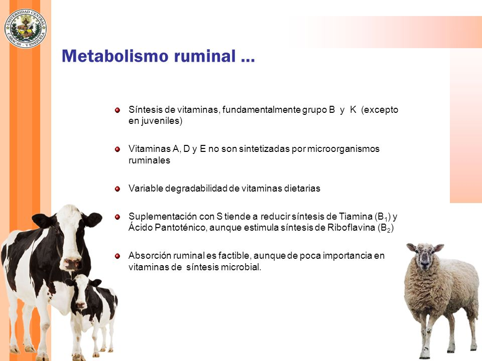 Metabolismo ruminal … Síntesis de vitaminas, fundamentalmente grupo B y K (excepto en juveniles)