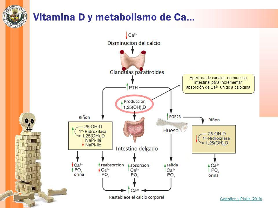 Vitamina D y metabolismo de Ca…