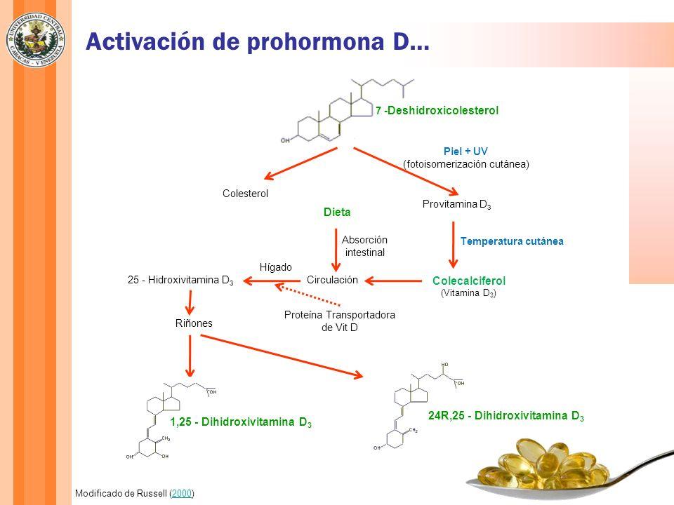 Activación de prohormona D…