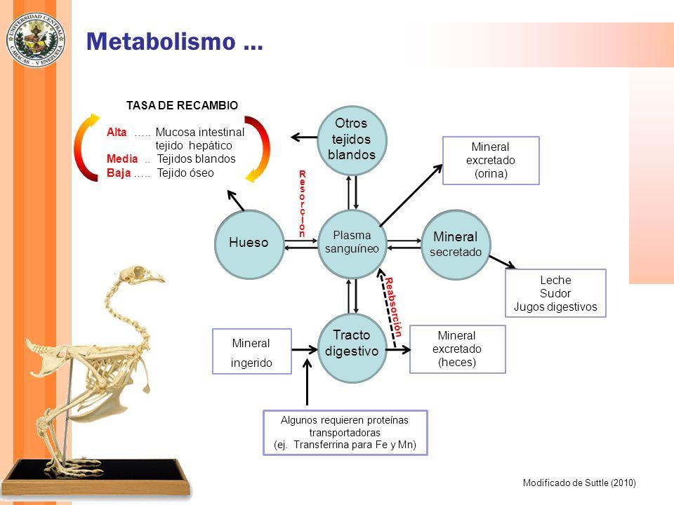 Metabolismo … Otros tejidos blandos Mineral secretado Hueso