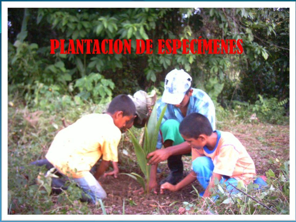 PLANTACION DE ESPECÍMENES
