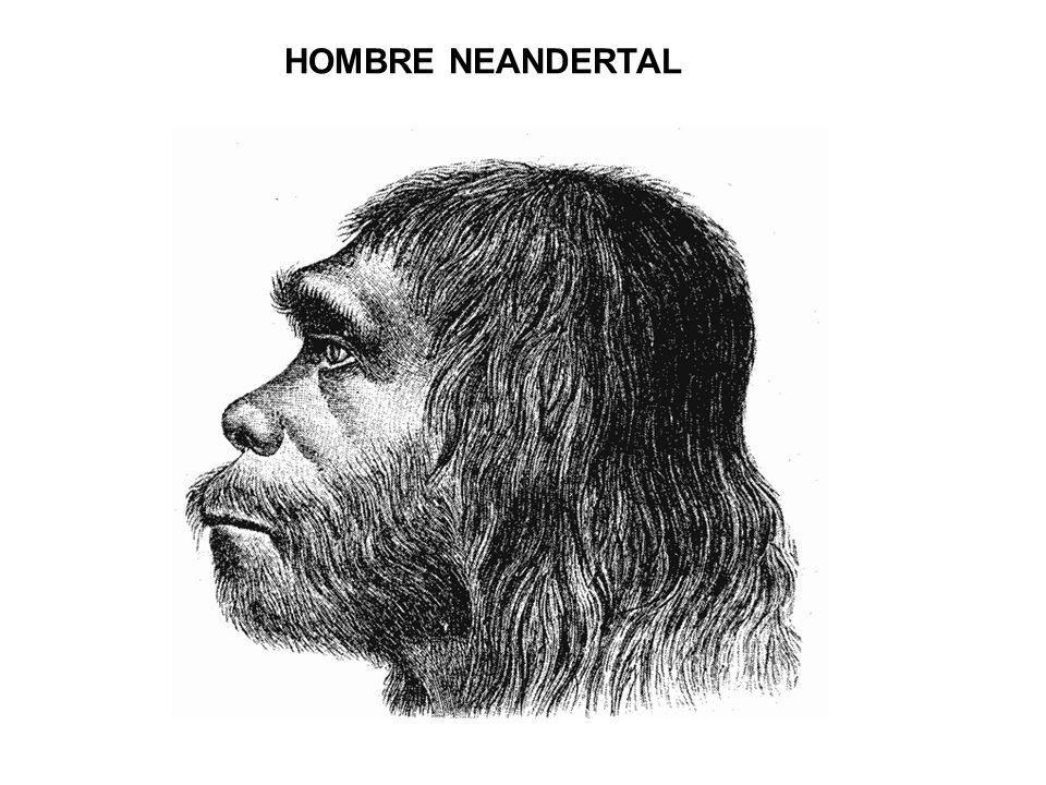 HOMBRE NEANDERTAL