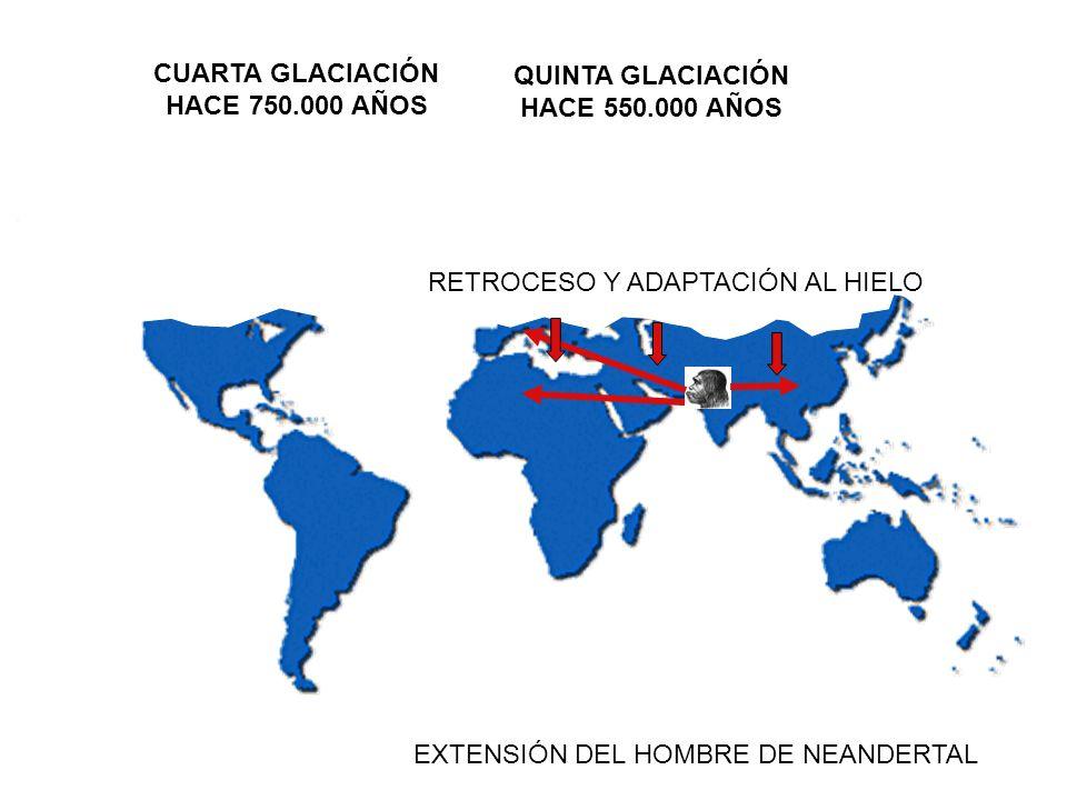 CUARTA GLACIACIÓN HACE 750.000 AÑOS. QUINTA GLACIACIÓN. HACE 550.000 AÑOS. RETROCESO Y ADAPTACIÓN AL HIELO.
