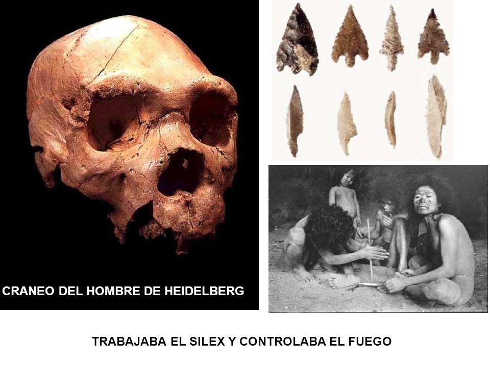 CRANEO DEL HOMBRE DE HEIDELBERG