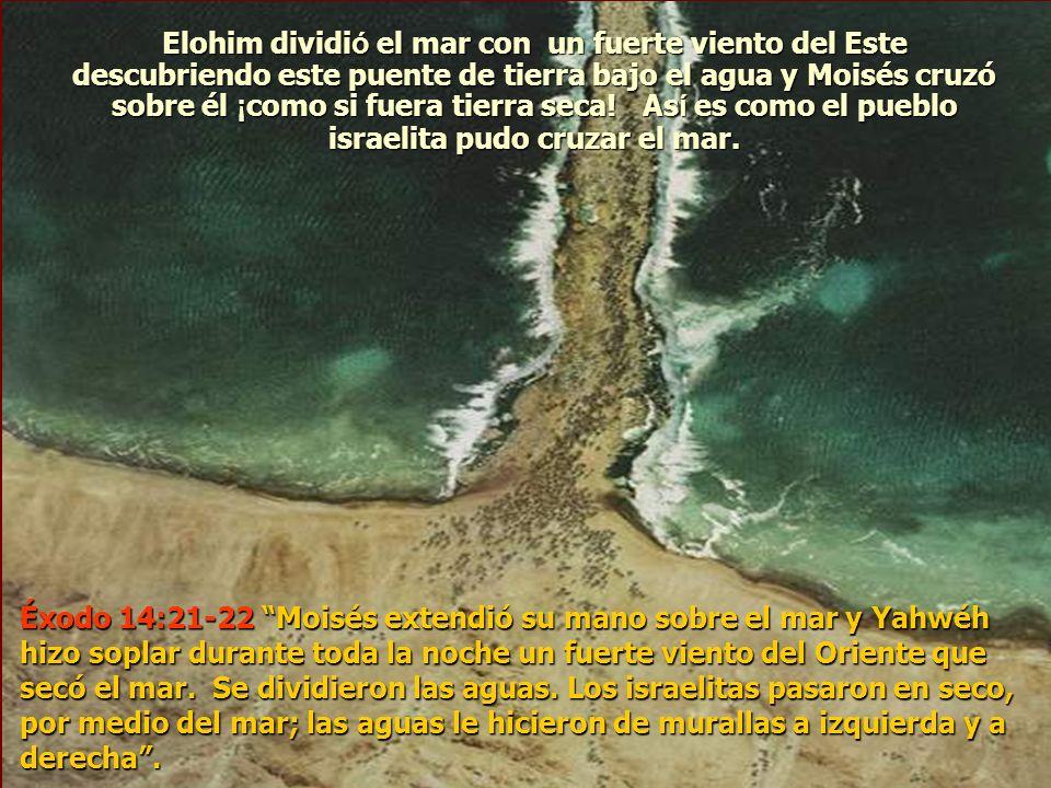 Elohim dividió el mar con un fuerte viento del Este descubriendo este puente de tierra bajo el agua y Moisés cruzó sobre él ¡como si fuera tierra seca! Así es como el pueblo israelita pudo cruzar el mar.